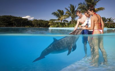 tulum-and-swin-with-dolphins-1